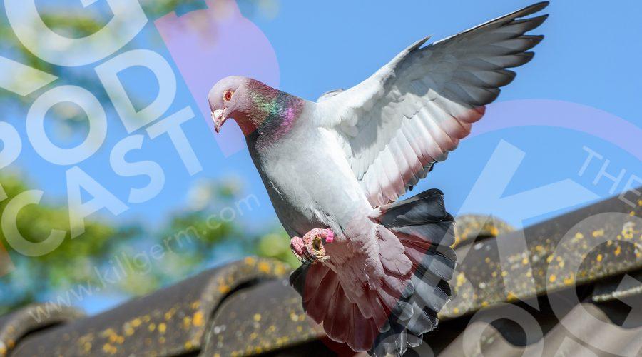 Episode 5: Bird Control Special